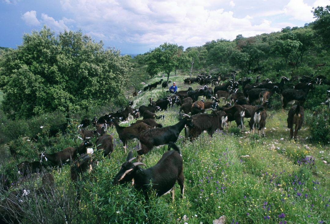 8º Simposio Internacional sobre ovejas, cabras y otras especies distintas de la vaca